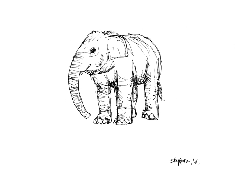 Elephant in London Zoo with White mount (A4) in Flat grain black frame for A4 mounts (J90)
